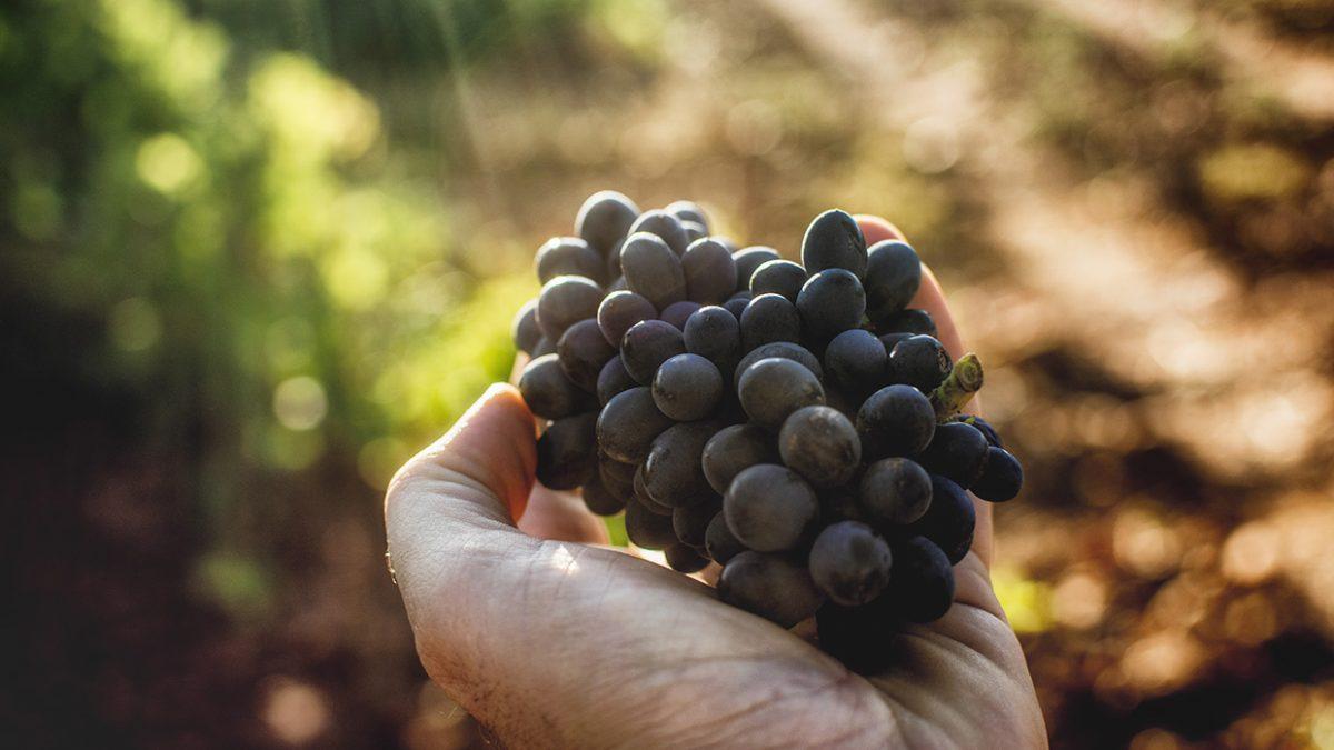 El BOE publica el real decreto que concreta las ayudas al sector vitivinícola por la crisis del Covid-19