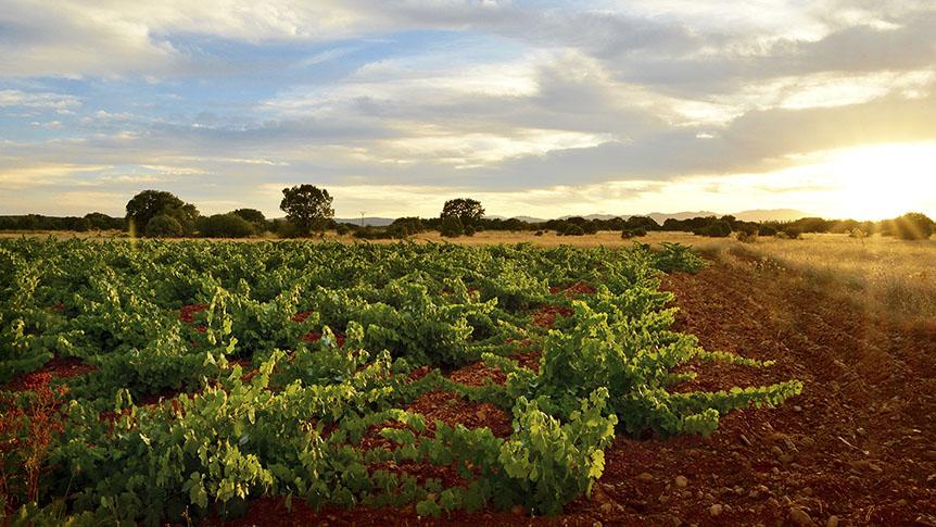 Una empresa californiana certifica que el viñdo de Fuentes del Silencio es uno de los más excepcionales de España, Italia y Estados Unidos