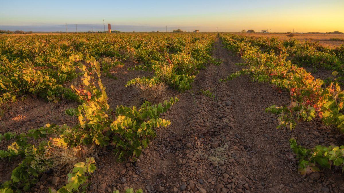 La DO conservará el viñedo viejo de Los Oteros