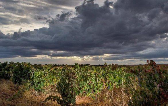 Luces entre Viñas - José Alberto Calvo
