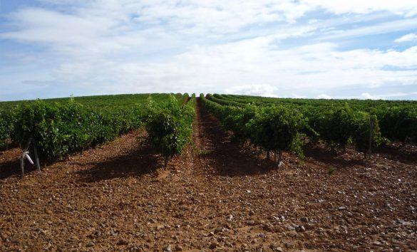 Descontento en el sector vitivinícola por la propuesta del Gobierno
