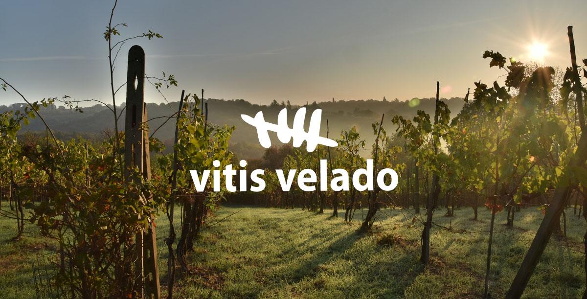 Vitis Velado