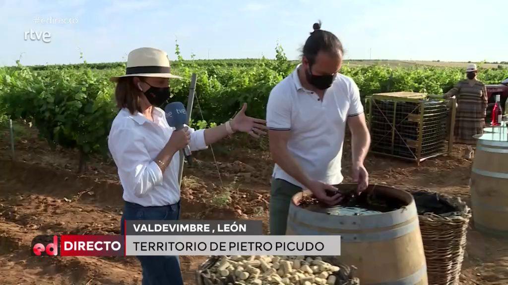 La DO León muestra sus vinos y  divulga el 'madreo' en el espacio  'España directo' de La 1 de TVE