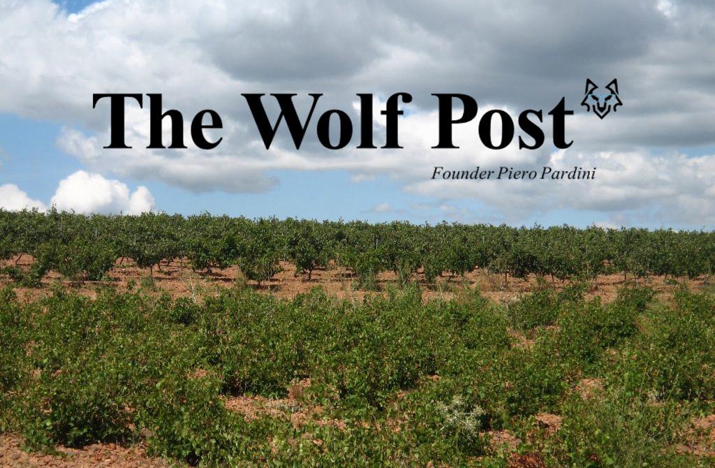 """Italia descubre el Prieto Picudo y  el Albarín en 'The Wolf Post' con  """"Eccellenze di Spagna: DO León"""""""